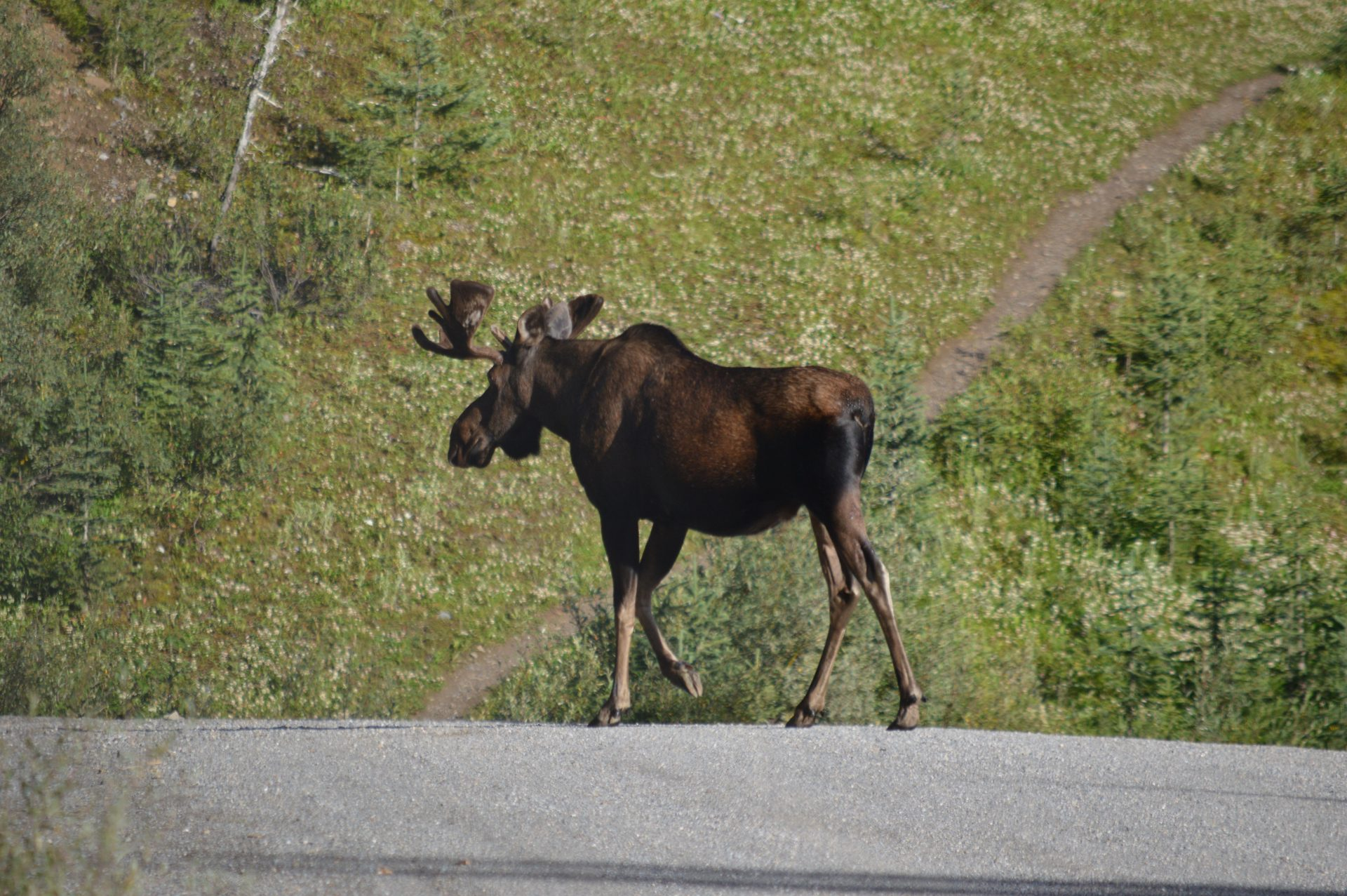Waanzinnig wildlife in West-Canada